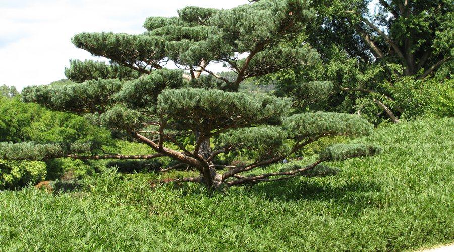 arbres bambouseraie anduze